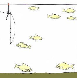 float fishing,wrong shotting