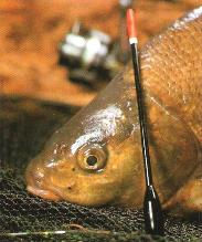 float fishing, coarse fishing