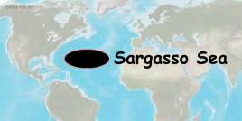 The Sargasso Sea where Eel's go to spawn